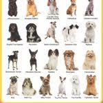 types of small dogs with pictures types of toy breeds dog breeds dog breeds toy