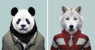 zoo animals in clothes.  Animals This Artist Spent 3 Years U0027Dressingu0027 Zoo Animals Like Humans And The Clothes  Fit Unbelievably Well  Bored Panda On In