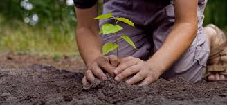words essay on growing trees and plants