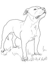 Click The Staffordshire Bull Terrier Colouring Page To View