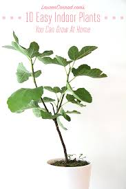 low maintenance office plants. green thumb the easiest indoor plants to grow in your home low maintenance office