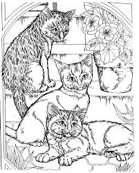 Cat Coloring Pages Adults At Getdrawingscom Free For Personal Use