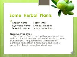 herbs plants pictures and names