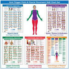 45 Best Body Code Charts Images In 2019 Coding Holistic