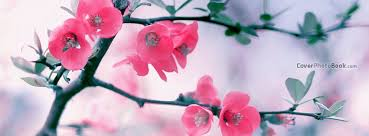 pink blossom flowers spring free facebook timeline profile cover nature