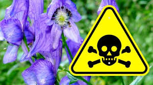 top 10 dangerous plants that can
