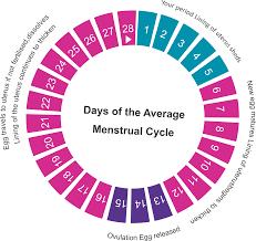 2 Health U Pregnancy Women U S Menstrual Cycle And