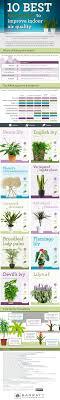 10-best-houseplants-to-improve-indoor-air-quality-