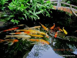 Pond Design Fish Pond Design Fountain Design Trading Page 3