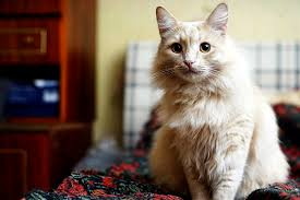 is your cat losing hair 6 reasons for