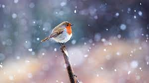 42+ Snow Bird Wallpaper on HipWallpaper ...