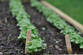 Vegetable Gardening Is A Healthy Hobby