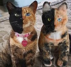 10 Datos sobre los Gatos que te fascinarán!