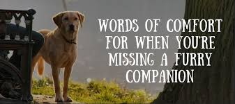 top 10 loss of dog poems love lives on
