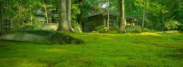 moss and stone gardens