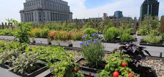 in urban jungles rooftop gardens can