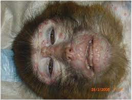 Non-Human Primate ...