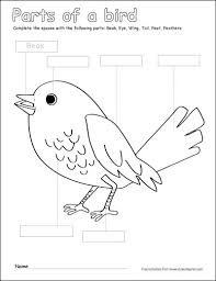 parts of a bird writing and coloring sheet label and color the parts of a bird on worksheets parts of the body for kindergarten