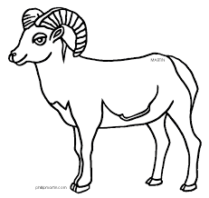 Small Picture Rocky Mountain Bighorn Sheep Coloring Page