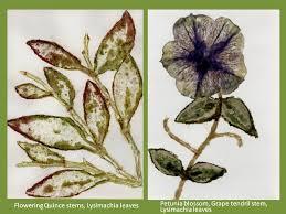 hammered botanical prints 12