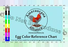 Ameraucana Chicken Color Chart Ameraucanas
