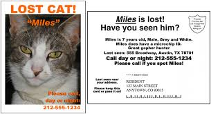 Lost Cat Flyer Lost Cat Clipart