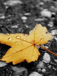 rain wallpaper hd for mobile. Fine For Preview Wallpaper Asphalt Rain Yellow Drops Leaves Autumn On Rain Wallpaper Hd For Mobile M