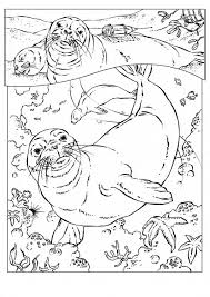 Small Picture Monk Seal coloring page Animals Town animals color sheet