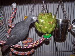 an artichoke with other foods inserted in the leaves makes a foraging toy