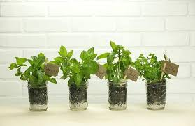 starter herb garden kit bright idea indoor home depot pretentious inspiration grow 5 her