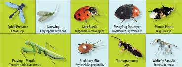 Beneficial Insects Chart Insects Beneficial Destructive Megawatt