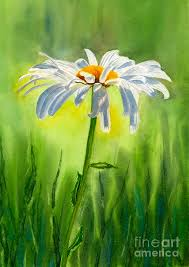 fl watercolor painting single white daisy by sharon freeman