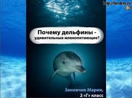 Дельфины удивительные млекопитающие Блог Татьяны Саксон Реферат на тему Дельфины удивительные млекопитающие дельфин животное