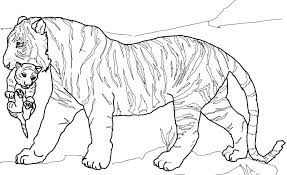 Here is a collection of free printable tiger coloring sheet for your kids to download, print and color. Coloring Page Of A Baby Tiger Realalitic Download Print And Color 28 Wild Tiger Images 1 Cute Tigers 2 Vicente Captainamericagifts Com