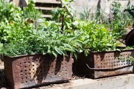 how to grow a herb garden. Herb Pots How To Grow A Garden