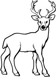 Deer Coloring Page Add Pipe Cleaner Antlers Recipes Party