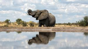 the asian elephants in orissa india available