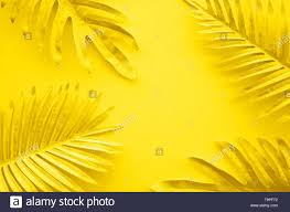 Plantspace Design Series Gold Color Of Tropical Leaves Foliage Plant Space Background