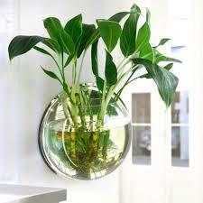 pot plant wall mounted hanging aquarium