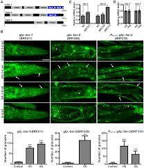 PLOS ONE: Diverse Functions of mRNA Metabolism Factors in Stress Defense  and Aging of Caenorhabditis elegans