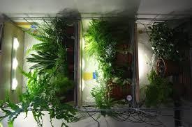 lighting for houseplants. Types Of Grow Lights For Indoor Plants Lighting Houseplants