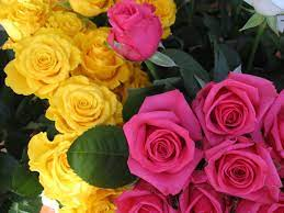 Yellow Roses Wallpapers - Wallpaper Cave