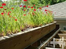 diy green roof s h e l t e r green roof shed diy green roof systems uk diy green roof