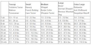 Labrador Retriever Height Chart True Puppy Growth Chart In Kilos Labrador Retriever Height