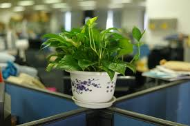 eco friendly office. green office plant eco friendly