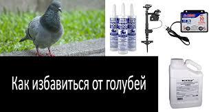 Как избавиться от голубей: TОП-8 репеллентов от голубей