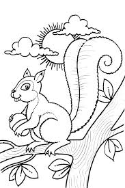 Red Squirrel Coloring Page Free Printable Pages Of Squirrels Deserts