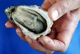 Oyster Vending Machine Inspiration French Oysters Go On Sale In Vending Machines