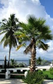 Palm Tree Identification