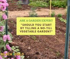 tilling a no till vegetable garden
